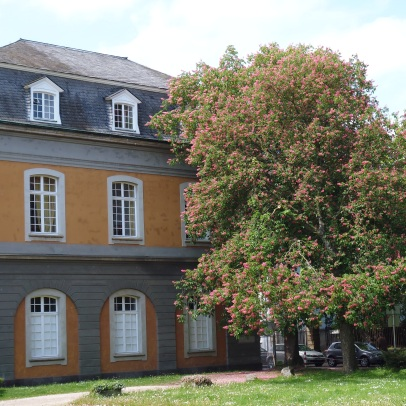 Horse chestnut trees in front of the University of Bonn