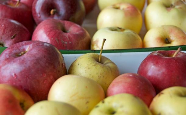 Apples for Bratapfelmarmelade