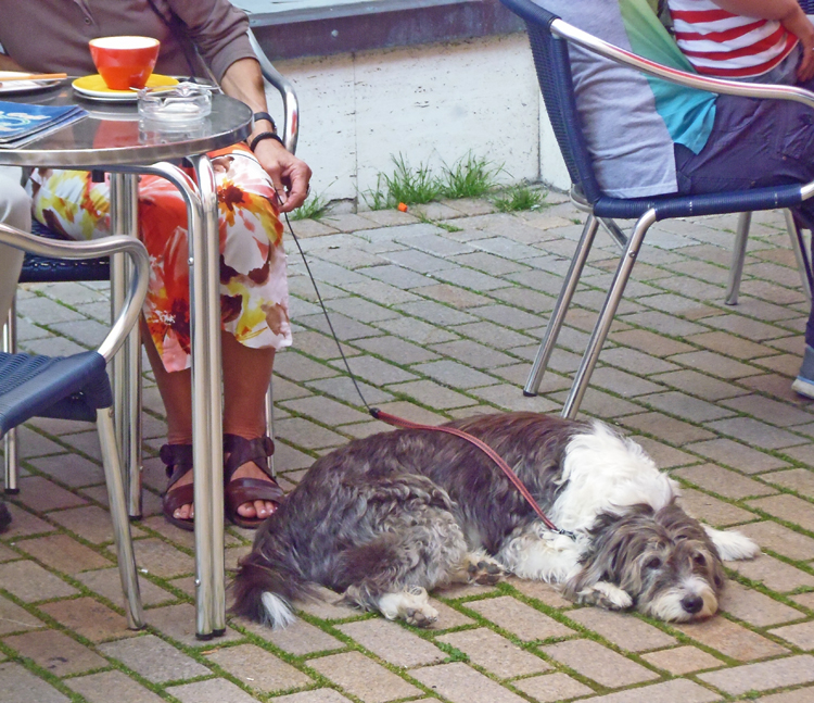 Dogs at outdoor cafe