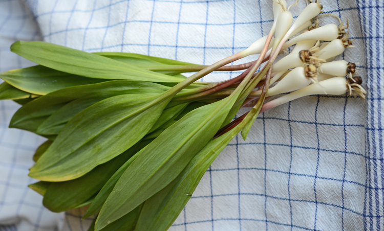 Ramps with bulbs
